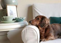 cute pup.  mine sits like that too!