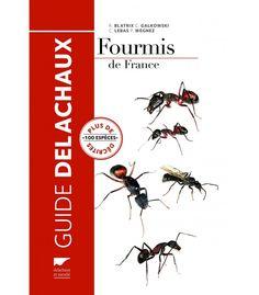 elevage de fourmis bien pour faire un elevage de fourmis France, Guide, Movie Posters, Ants, Film Poster, French, Film Posters