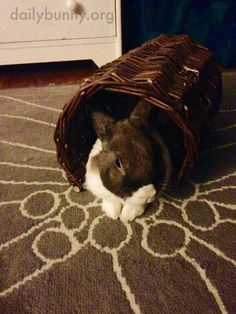 Bunny relaxes in a wicker tube - September 18, 2016 - More at today's Daily Bunny post: http://dailybunny.org/2016/09/18/bunny-relaxes-in-a-wicker-tube/