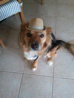 Hipster dog. www.petprojekt.com