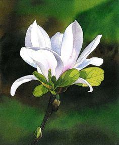 FLOWERS - Krzysztof Kowalski -Watercolors