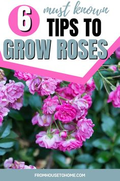 A beautiful rose garden of your own is not out of reach. Check out this essential guide about how to grow roses for tips on planting, pruning, fertilizing, and choosing the best roses for your landscape. The perfect plants for a full sun garden! #fromhousetohome #gardening #roses #sunplants #fullsunplants Full Sun Shrubs, Full Sun Plants, Shade Garden, Garden Plants, Full Sun Garden, Best Roses, All About Plants, Heirloom Roses, Types Of Roses