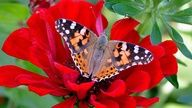 flower, red, butterfly, wallpaper, floral, wallpapers