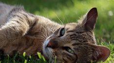 Cat Face Lying