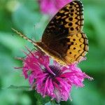 Tips on how to attract butterflies to your garden.