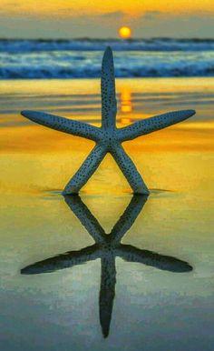 Beautiful starfish
