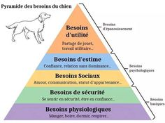pyramide des besoins canins