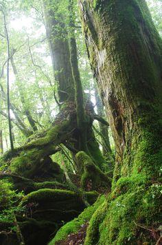 Forest of the life, Yakushima, Kagoshima, Japan