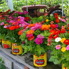 Going the colorful, casual route for the wedding flowers? Consider zinnias in tin cans. by bduck is awesome or plant zinnia in pots Zinnia Garden, Cut Flower Garden, Flower Farm, Flower Pots, Cut Flowers, Colorful Flowers, Beautiful Flowers, Fleurs Diy, Pot Jardin