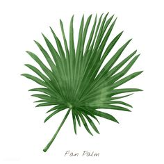 Fan palm leaf isolated on white background Free Vector Coconut Leaves, Coconut Palm Tree, Leaf Illustration, Free Vector Illustration, Illustrations, Palm Background, Freesia Flowers, Palm Tree Vector, Palm Tree Silhouette