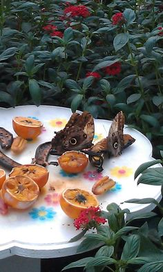 Twitter / kathleenoneill: These @NHM_London butterflies ...