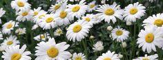 Ảnh bìa hoa đẹp rực rỡ cho Facebook • Ảnh bìa FB đẹp