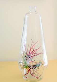 Air Plants are pretty cool looking...and easy to take care of!