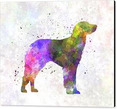 German Longhaired Pointer In Watercolor Canvas Print by Pablo Romero