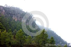 Photo about A rocky mountain on the mediterranean coast shrouded in mist shows a beautiful rocky outcropping with a pine forest. Image of cliff, shrouded, beautiful - 81139107 Pine Forest, Rocky Mountains, Mists, Coast, Stock Photos, Nature, Outdoor, Image, Beautiful