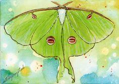 luna moth art   Luna Moth by cldart on deviantART