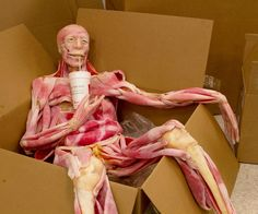 Ultra-Real Synthetic Cadaver Chilling