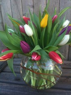 Tulips come in an incredible variety of colors, height, and flower shapes. Some Tulips are even fragrant. The word Tulip is thought to be a corruption of the Turkish word 'tulbend' for turban.
