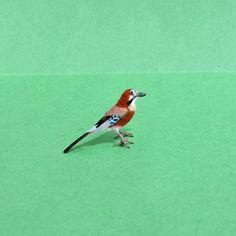 Miniature Jay 1:12scale ~ Dollhouse Miniature ~ Realistic Birds ~ Pets ~ Animals ~ OOAK Miniatures by Katie Doka ~ TO ORDER!