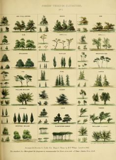 tree identification by leaf shape Trees And Shrubs, Trees To Plant, Leaf Identification, Illustration Botanique, Tree Care, Tree Leaves, Pine Tree, Trendy Tree, Tree Designs