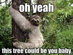 Sloth this tree could be you