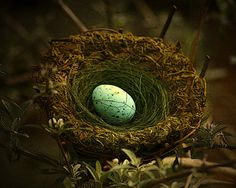 Speckled bird's egg. Spring