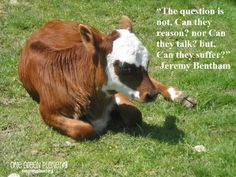 """""""The question is not, Can they reason? nor Can they talk? but Can they suffer?"""" - Jeremy Bentham Credit: http://www.onegreenplanet.org/animalsandnature/14-quotes-every-animal-advocate-should-know-by-heart/"""