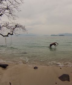 Koh Wai. Thaïlande. Bird, Water, Animals, Outdoor, Gripe Water, Outdoors, Animales, Animaux, Birds