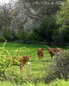 The cow pasture! Country Farm, Country Life, Country Living, Country Roads, Holidays In England, Country Scenes, Felder, Down On The Farm, Farms Living