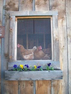I could put a chicken greens window box under the girls' window for summer treats