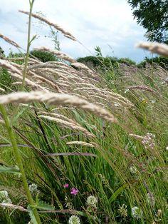 great grasses
