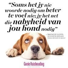 Our Favourite Dog Quotes - Good Housekeeping Animal Quotes, Dog Quotes, Cute Quotes, Qoutes, Funny Quotes, Good Housekeeping, Afrikaans, Dog Life, Feel Better