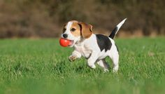 Most Appropriate Dog Toys for Puppies: What Pet Owners Must Know