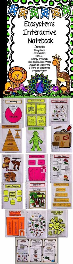 ecosystems interactive notebook food chains webs pyramids types of animals