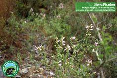 No te quedes sin compartir tus fotografías, envíalas a Sierra Picachos por Facebook.