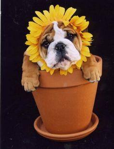 Wiww yew be my sunshine?