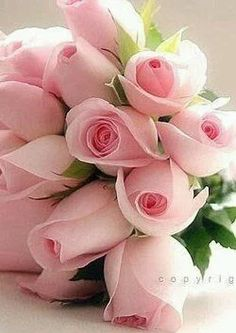 Beautiful Bouquet of Pink Roses Mais My Flower, Pretty Flowers, Flower Power, Pink Flowers, Flowers Gif, Pink Tulips, Fresh Flowers, Frühling Wallpaper, Rosa Rose