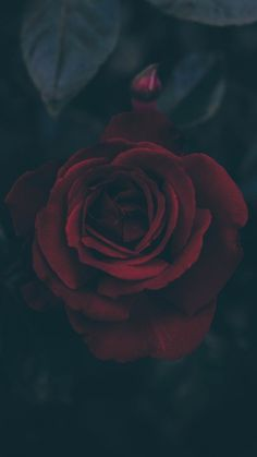 68 Ideas Phone Wallpaper Dark Floral For 2019 Wallpaper Tumblr Lockscreen, Dark Phone Wallpapers, Dark Background Wallpaper, 1440x2560 Wallpaper, Dark Wallpaper Iphone, 480x800 Wallpaper, Aesthetic Iphone Wallpaper, Flower Wallpaper, Dark Backgrounds