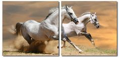 Wholesale Interiors VC-2055AB Galloping Grandeur Mounted Photography Print Diptych - Each