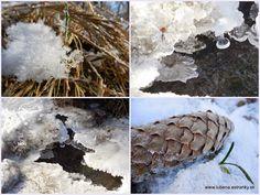 Čaro zimnej prírody