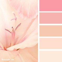Red and pink, peach color palette Palette Deco, Pink Palette, Pastel Colour Palette, Colour Pallette, Peach Color Palettes, Color Schemes Colour Palettes, Color Combos, Peach Color Schemes, Peach Colors
