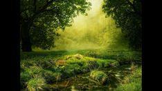 Free Image on Pixabay - Composing, Glade, Forest, Meadow Piper Mclean, Fantasy Landscape, Landscape Photos, Photomontage, Illusion Photos, Relaxation Meditation, Meditation Music, Misty Forest, Forest Painting