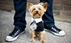 Someday I will have a little Yorkie to  come home to after concerts and yes, I will be dressing it like this.