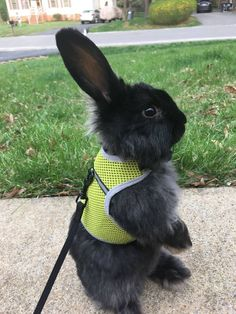 Sister-in-law has a new bunny