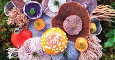 The Magical Beauty Of Mushrooms Captured By Jill Bliss In 10+ Colorful Photos | Bored Panda