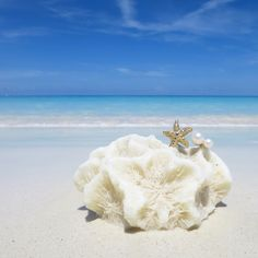 『Starfish and Pearl Ring』(12,800yen+tax)