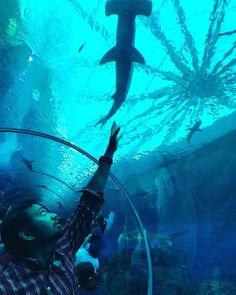 #seaaquarium #seaaquariumsingapore #singapore