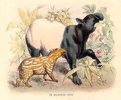 ilustracion tapir con cria