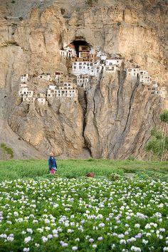"""Monastère de Phuktal et champ de patates vus depuis le village de Yugar, Zanskar Phuktal monastery seen from Yugar - Zanskar.  Cette photo fait partie de l'album  """"fragments d'un voyage amoureux""""    Lorsque l'on va à Phuktal pour la première fois, on prend le risque de ne plus voir la vie tout à fait avec les mêmes yeux, le risque d'en rêver très souvent, le risque aussi de vouloir y retourner très vite ! Le lieu s'accroche à votre mémoire comme le monastère s'accroche à sa paroi rocheuse…"""