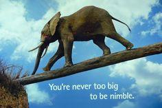 Nimble Elephant ;)
